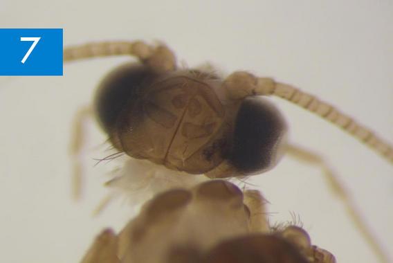 Genero-de-insecto-que-se-creia-extinguido-en-Europa_image_380