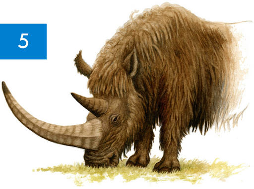 Rinocerontes-lanudos-en-Asturias_image_380