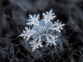copo de nieve 17