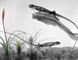 iguanas rayos X