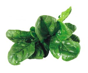 spinach-552987-m