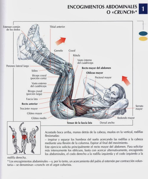 encogimientos_abdominales