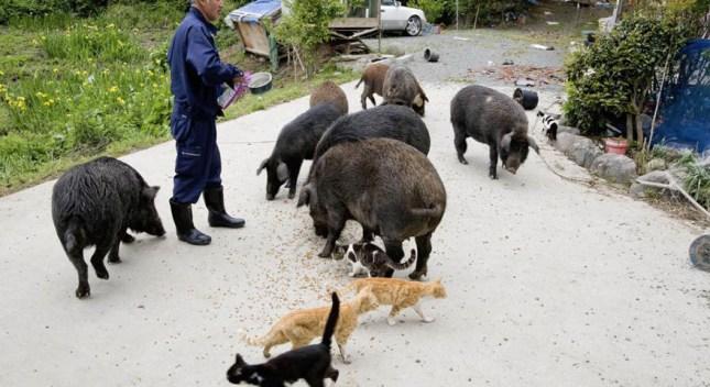 fukushima-radioactive-disaster-abandoned-animal-guardian-naoto-matsumura-14-1-880x480