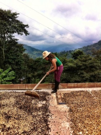Sundrying coffee beans on the roof terrace