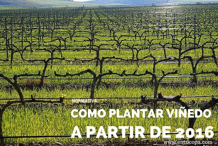 Cómo plantar viñedo a partir de 2016