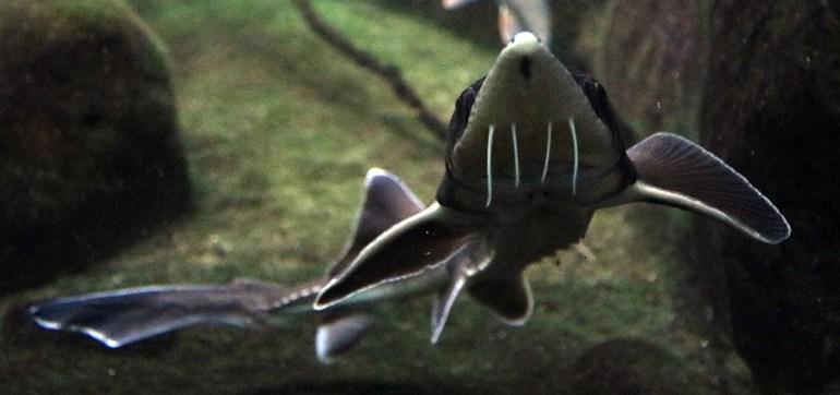 Weird Fishy Bro