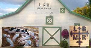 L & B Mini Ranch