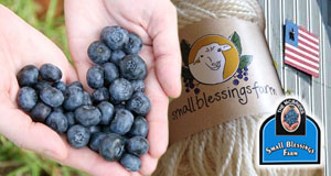 Small Blessings Farm