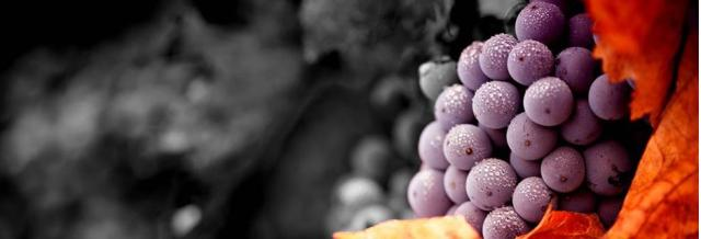 Existen muchas rutas ideales para descubrir los vinos que ofrece Madrid, comunidad con una ámplia oferta de bodegas y turismo enológico