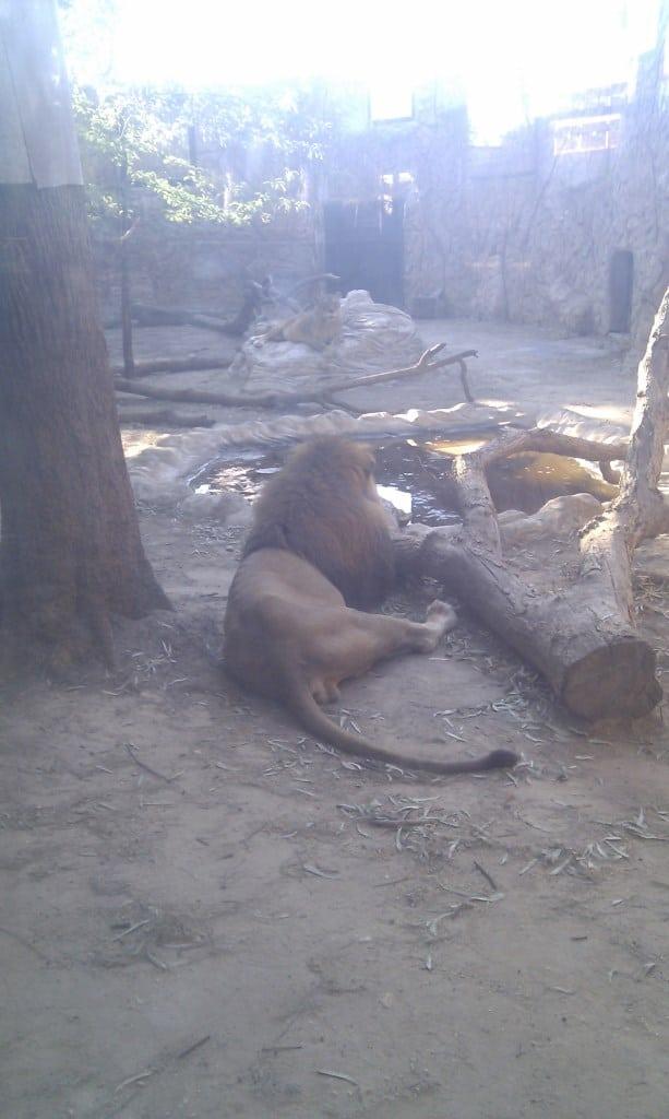 El día de picnic empezó visitando el pequeño pero peculiar zoo de Ayamonte. Choca ver tan cerca del mar leones, tigres, monos, cebras...