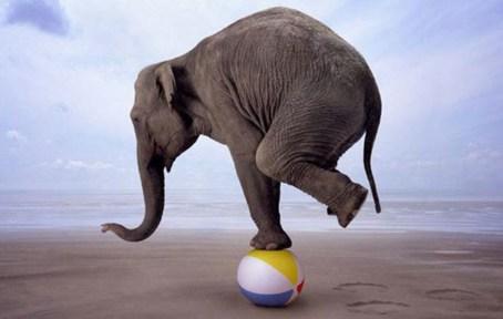 elephant balancing on beach ball