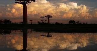 Avenida de Baobabs cerca de Morondava, Madagascar