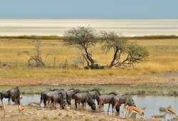 Desierto de Ethosa en Namibia, África