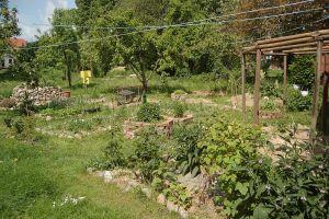 800px-Permaculture_garden