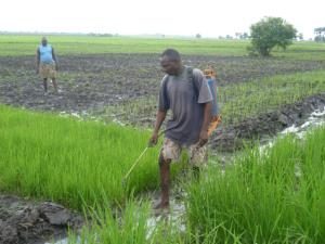 Benue community to host AAP's flagship adaptation centre AAP Pix 300x225