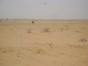 NCF commends, advices govt on Great Green Wall project DSC07891 300x225