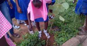 WED 2014: Youth groups plant trees, engage children School Tree Palnting 3