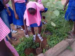 School Tree Palnting 3  WED 2014: Youth groups plant trees, engage children School Tree Palnting 3 300x225