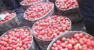 A tomato farmer's account of unpredictable weather IMG 20140509 095800