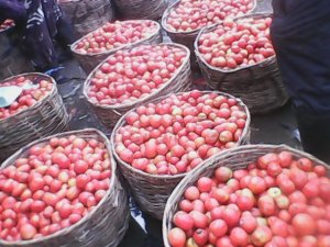 A basket of tomatoes at Mile 12 market in Lagos sells for $80  A tomato farmer's account of unpredictable weather IMG 20140509 095800 300x225