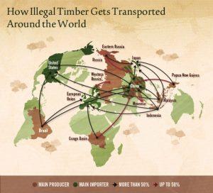 illegal-logging-001  Combating illegal logging with smartphones, smarter shopping illegal logging 001 300x272