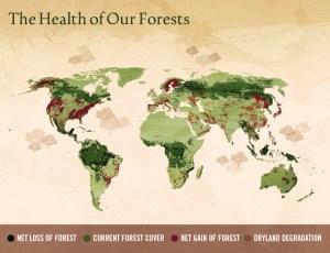 illegal-logging-002  Combating illegal logging with smartphones, smarter shopping illegal logging 002 300x230