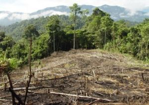 Deforestation in Peru. Photo credit: archive.peruthisweek.com