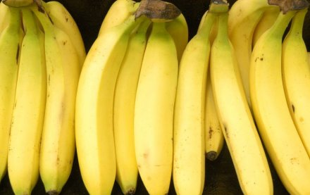 GM bananas