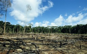 One of the projects is designed to takle deforestation. Photo credit: telegraph.co.uk  GEF to invest $255 million in forestry, food security, cities deforestation 2074483b 300x188