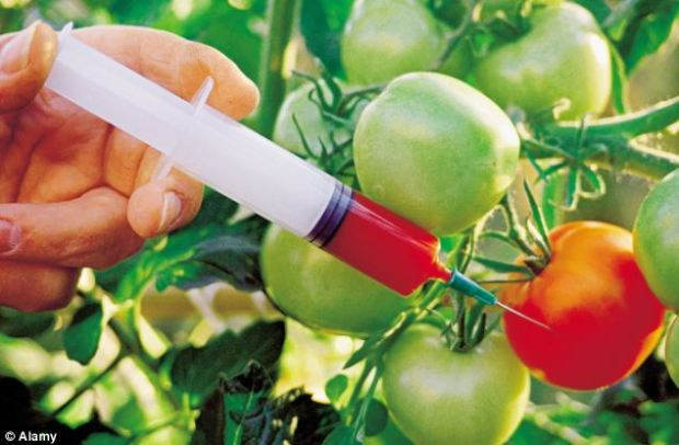 Critics fear genetically modified foods can cause environmental harm and damage human health. Photo credit: dailymail.co.uk