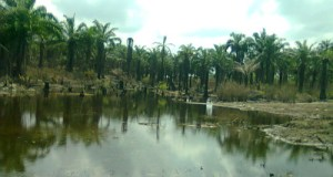 OIL SPILL AT IBUU CREEK OKWUZI