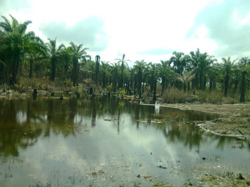 OIL SPILL AT IBUU CREEK OKWUZI  Spill: Ikebiri community sues ENI, NAOC, demands compensation OIL SPILL AT IBUU CREEK OKWUZI e1427010213227