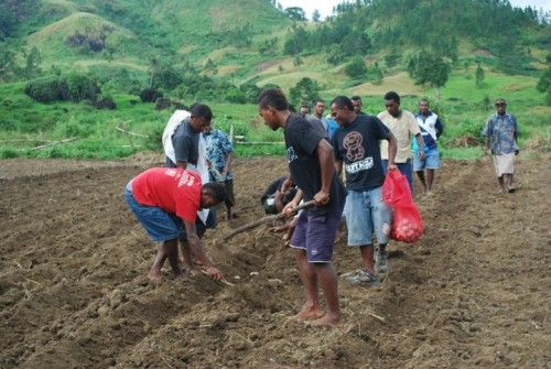 Youths involved in farming. Photo credit: smeonline.biz