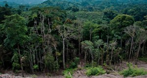 drc_forest