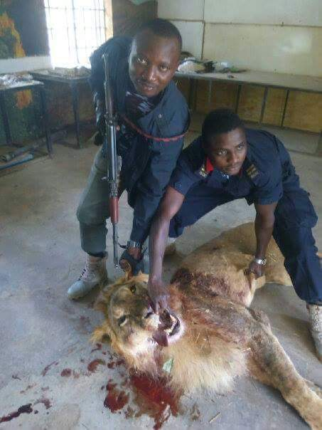 Officers attacking the lion