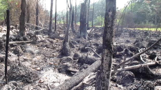 Forests and wetlands have been set on fire as oil companies and their contractors try to hide oil spills...