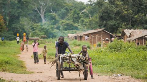 Paris Agreement  Campaigners flay proposed Norway-backed Congo forest logging Congo