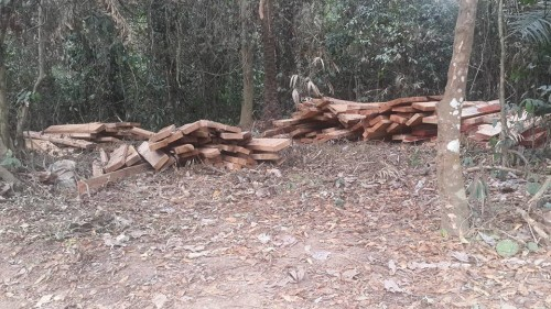 Timber extraction in Boki