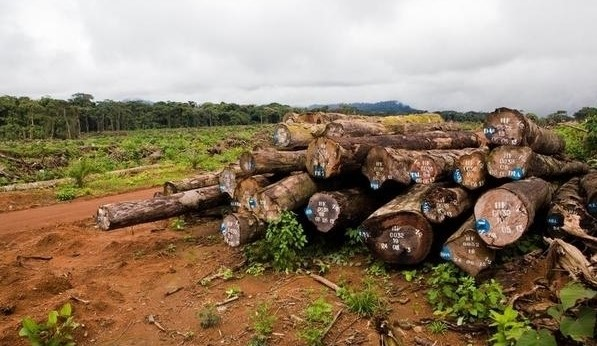 Observers insist that Cameroon's pledge to combat illegal logging needs more action and more transparency