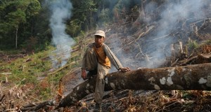 Deforestation in China  Forests to cover one quarter of China under nation's 'eco-civilisation' NdmBb3shSgW6hjcwEEwAniNA