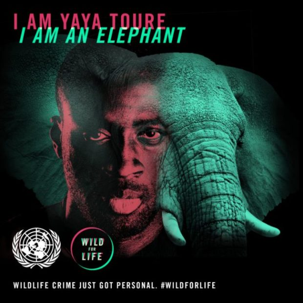 Four-time African Footballer of the Year Yaya Touré (Manchester City, Ivory Coast), is backing elephants