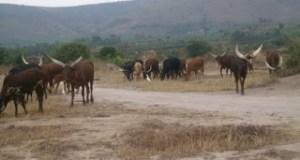 Sadc  SADC to launch $2.7b El-Niño drought appeal fund Sadc