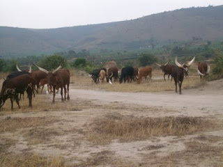 Climate change as a result of global warming continues to cause havoc in various parts of the world, drying up farmlands that livestock used to depend on