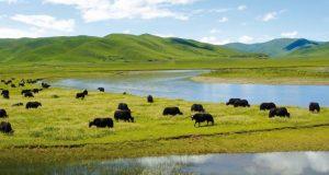 wetlands ecosystem