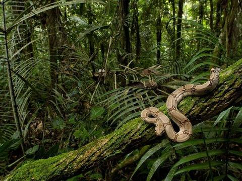 The Congo Basin Forest