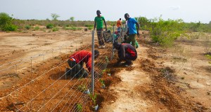 Burkina Faso tree planting  World Day to Combat Desertification: Conserving healthy soils for resilient drylands Burkina Faso
