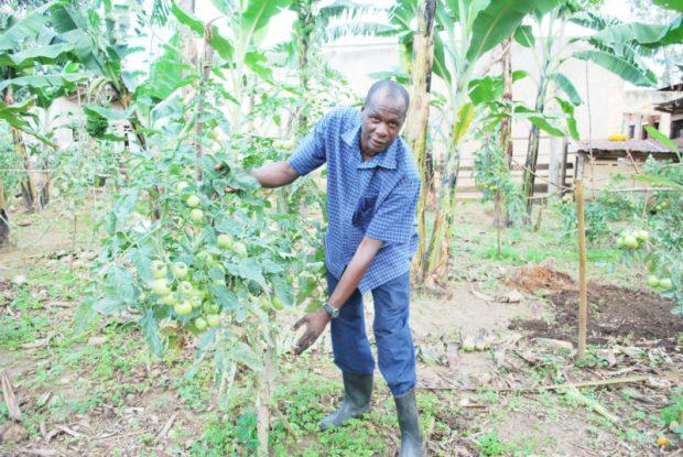 farmer-tomatoes  Uganda Parliament passes biosafety bill, farmers rejoice tomatoes e1508010763750