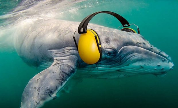 marine noise  New guidelines to assist in managing marine noise whale e1509033543999