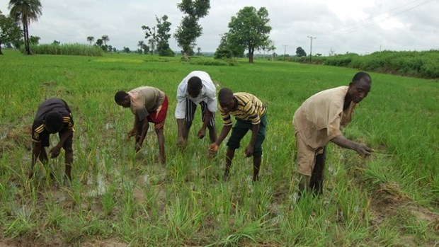 Fadama  Group wants government to provide improved seedlings for smallholder farmers fadama nigerian farmers
