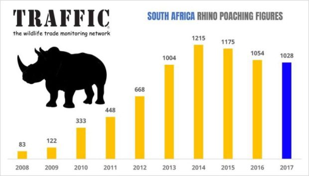 South Africa rhino poaching